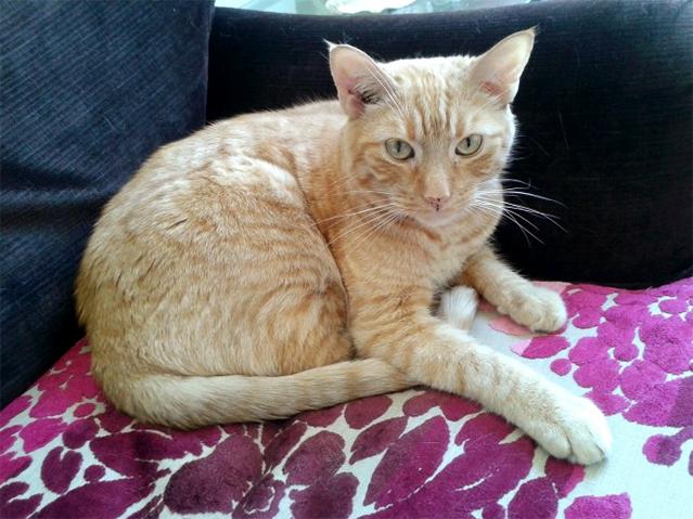 Bello, o norte americano mais gato que conheci